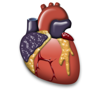 Heart organ png. Cardiology icon