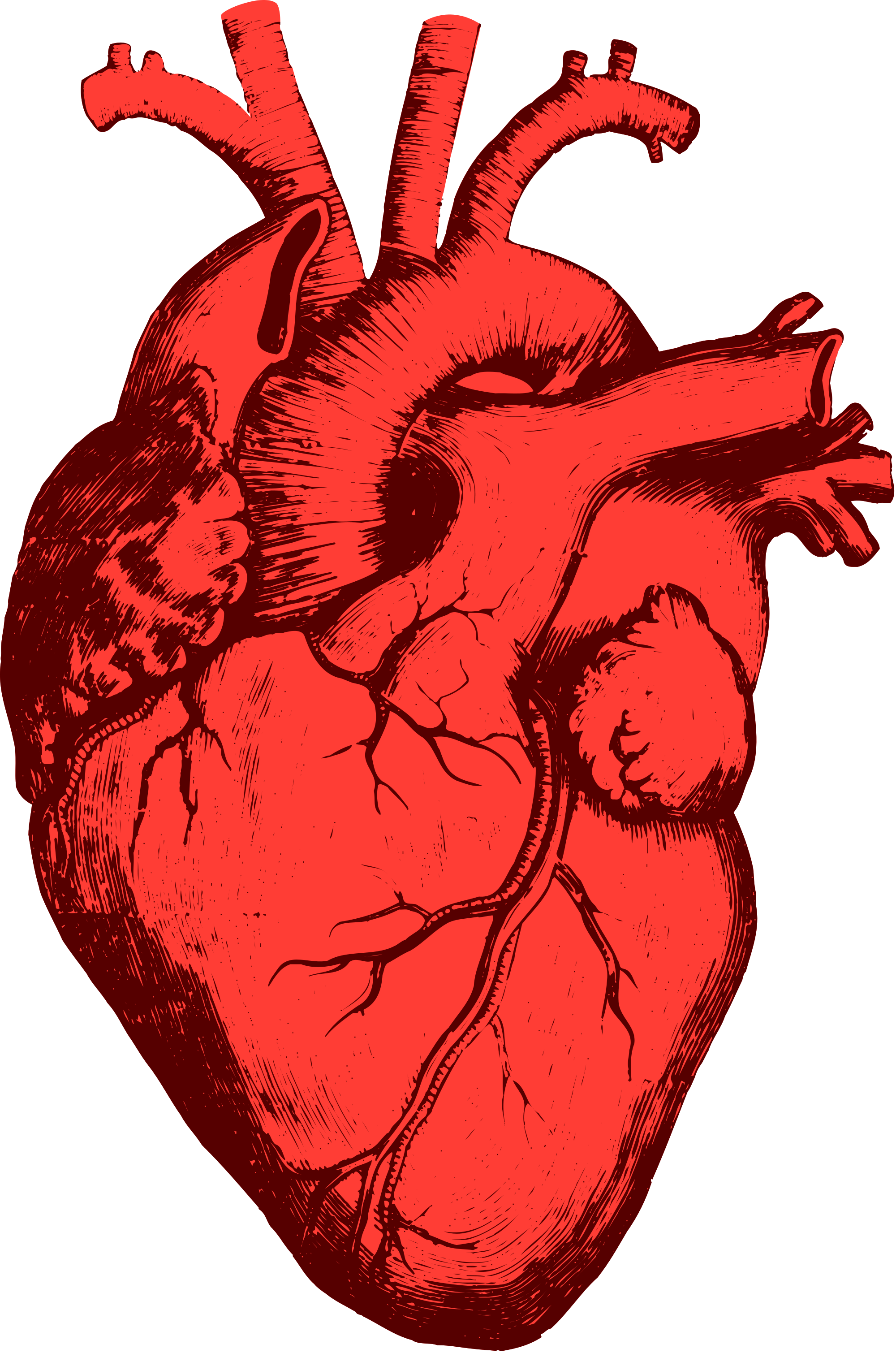 Heart, png real. Collection of heart