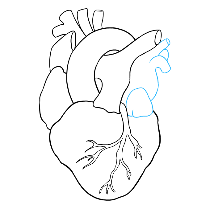 Drawing chrome realistic. Human heart sketch images