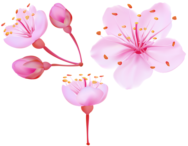 blossom clipart weeping cherry tree