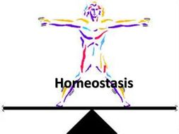 Heat clipart homeostasis. Year applied science d