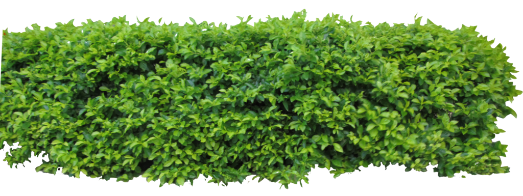 Hedge png. By owhl stock on
