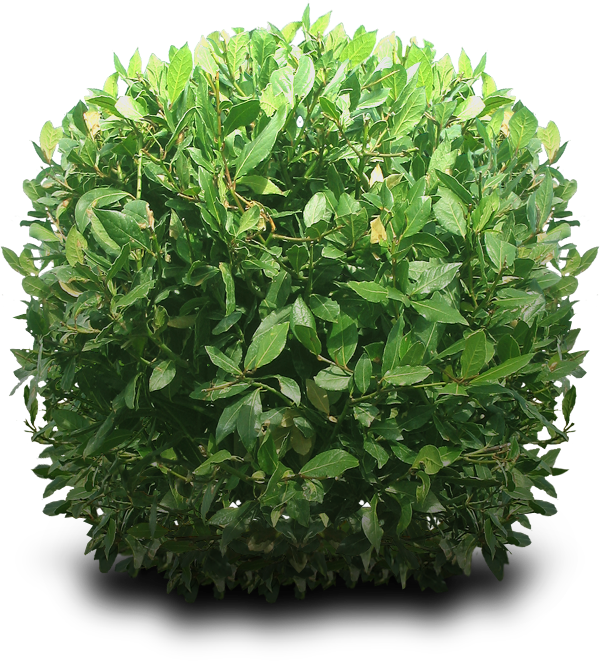 Bushes in plan png. Shrub by dbszabo on