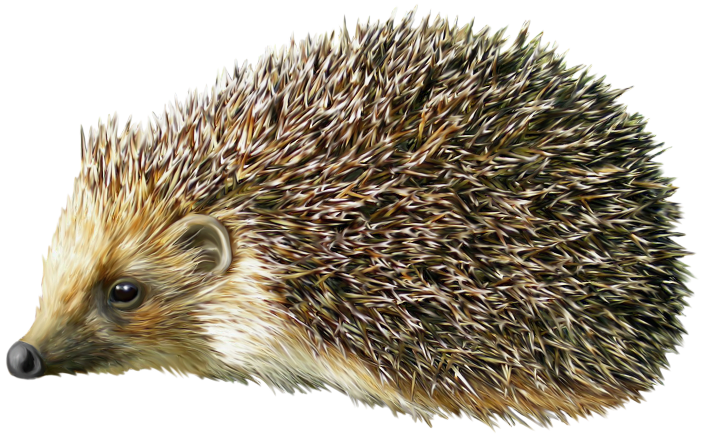 Hedgehog clipart. Png best web