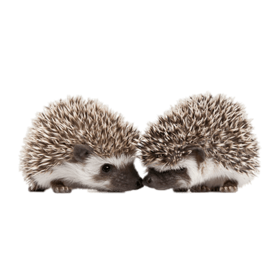 Hedgehog clipart baby hedgehog. Rolled up transparent png