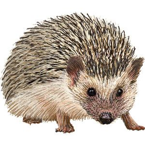 Hedgehog clipart baby hedgehog. Pinterest hedgehogs clip art