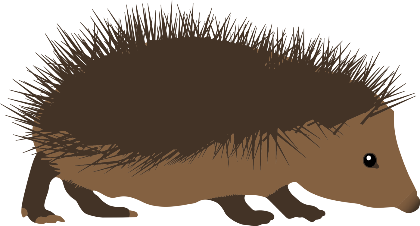 Hedgehog svg woodland animals. Hedgehogs download echidna porcupine