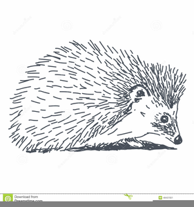 Hedgehog clipart hedgehog outline. Cute free images at