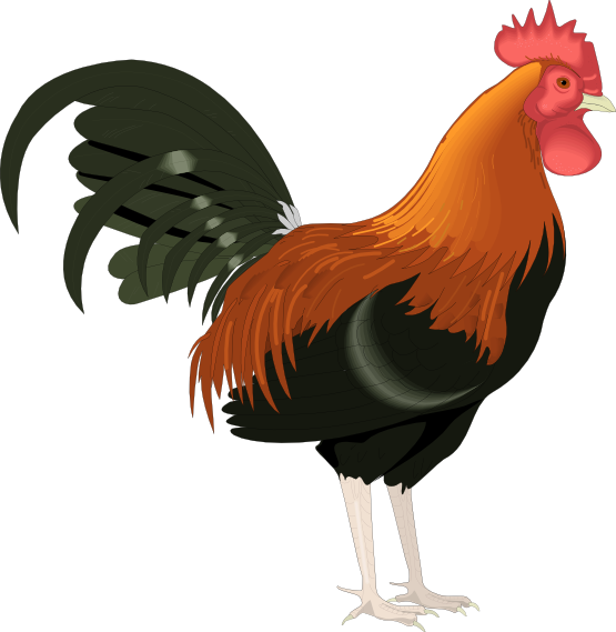 Rooster clipart. Best images on
