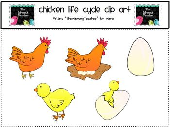 hen clipart life cycle chicken