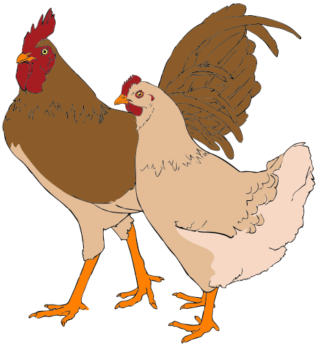 Hen vector rooster. File and clipart svg