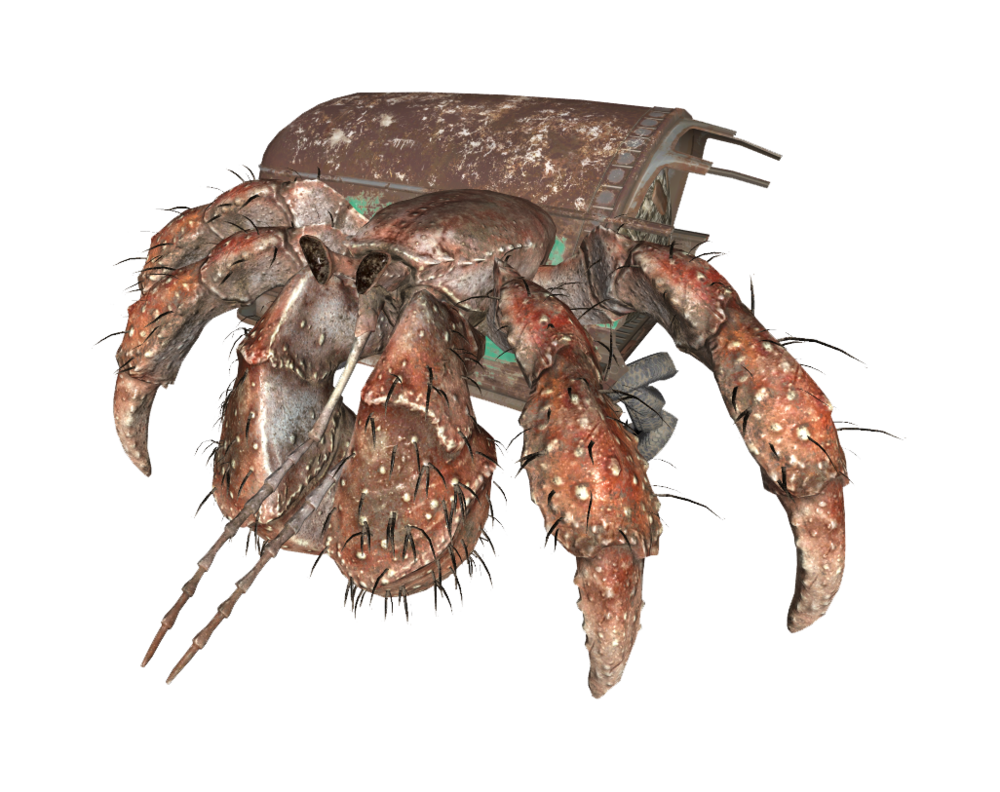 Hermit crab png. Crabs fifth edition fallout