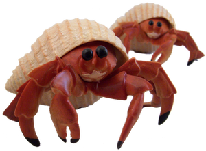 Hermit crab png. So you want to
