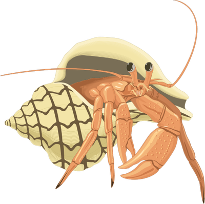 Hermit crab png. Crabs google search keep