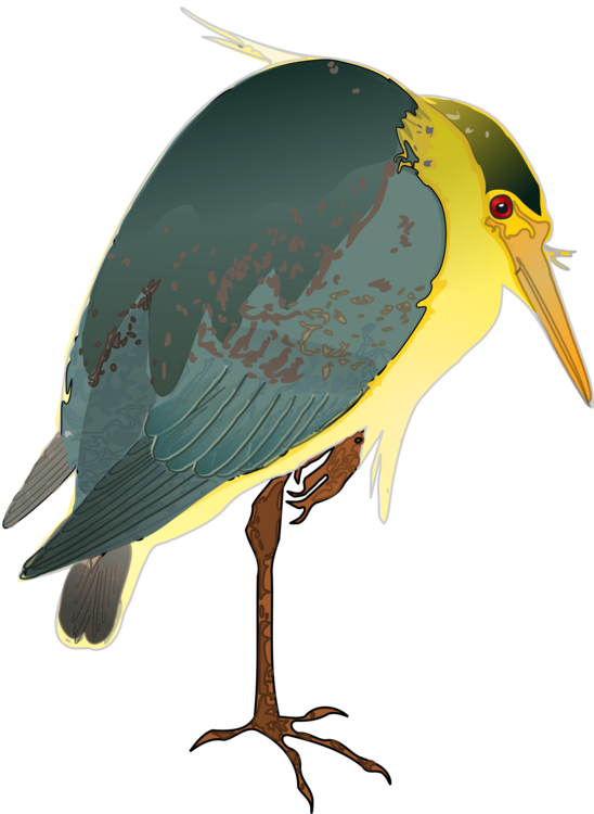 Heron vector clipart. Green black crowned night