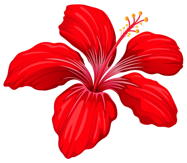 Hibiscus bouquet png. Exotic red flower image