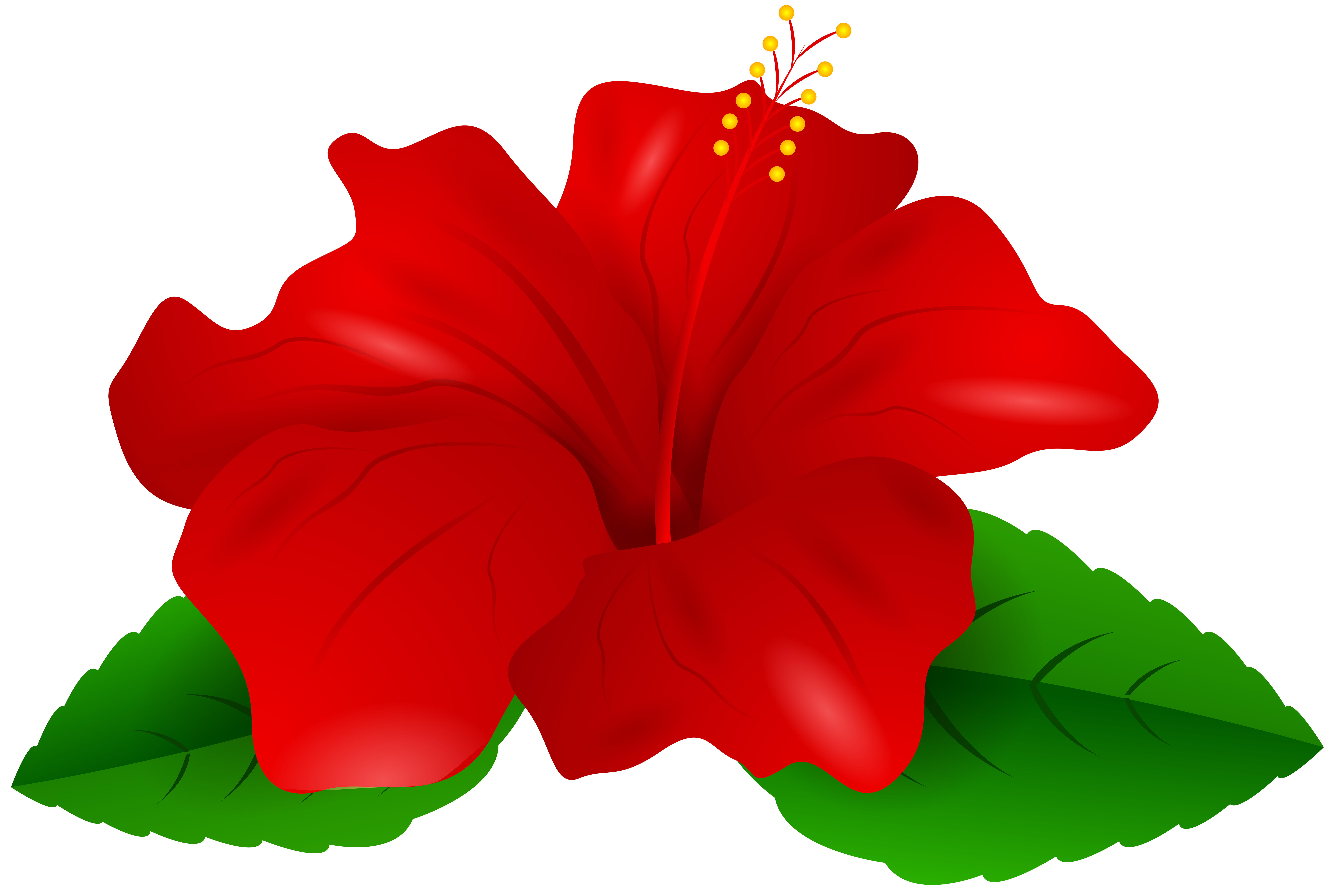 red hibiscus png