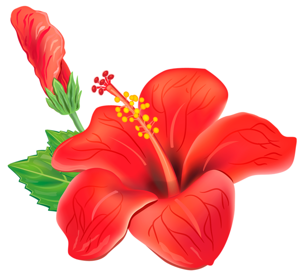 Tropical flower png. Red exotic clipart picture