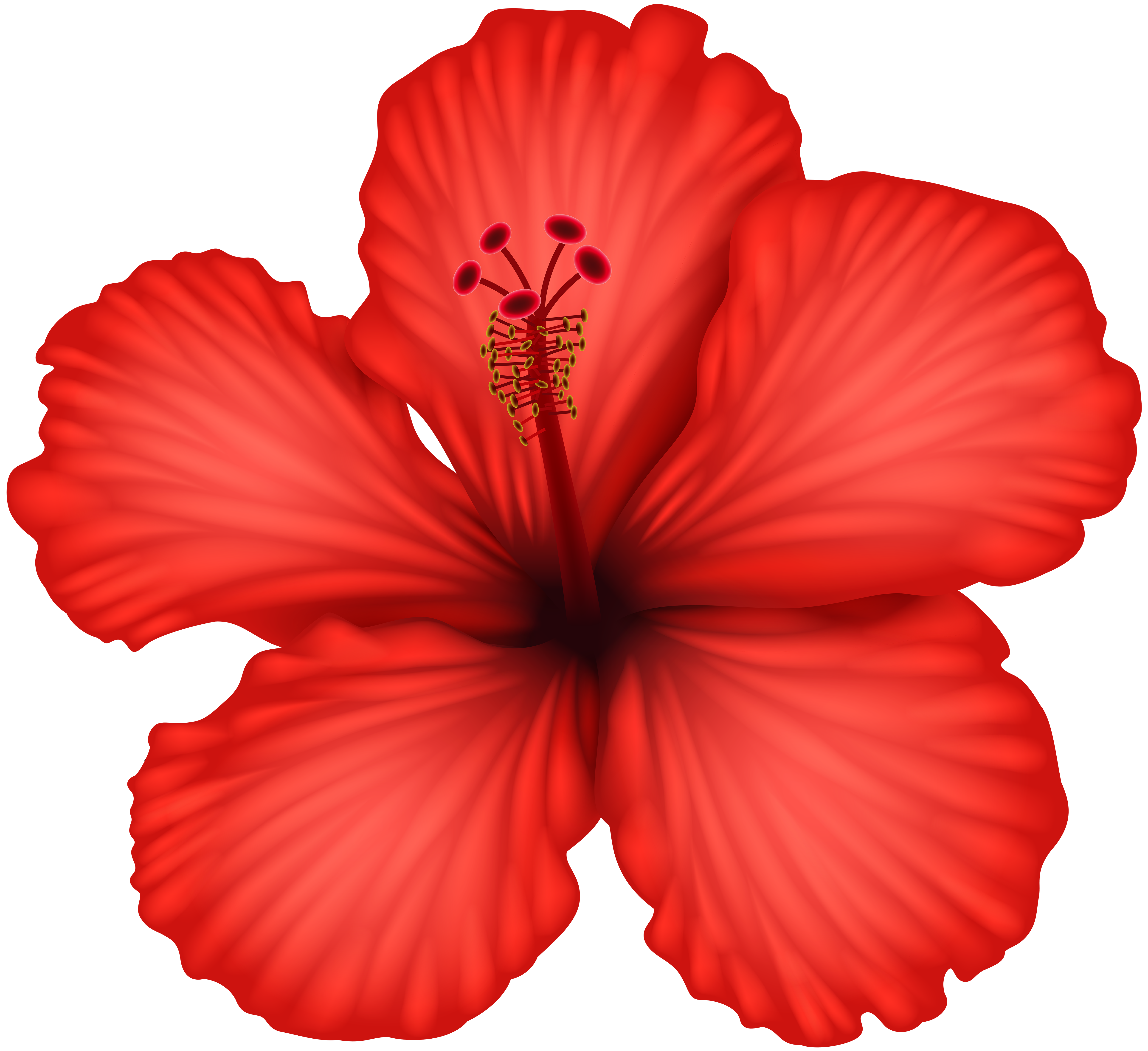 Hibiscus clipart png. Red clip art gallery