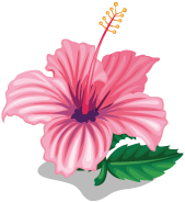 Tiny flower png. Image hibiscus zoo wiki