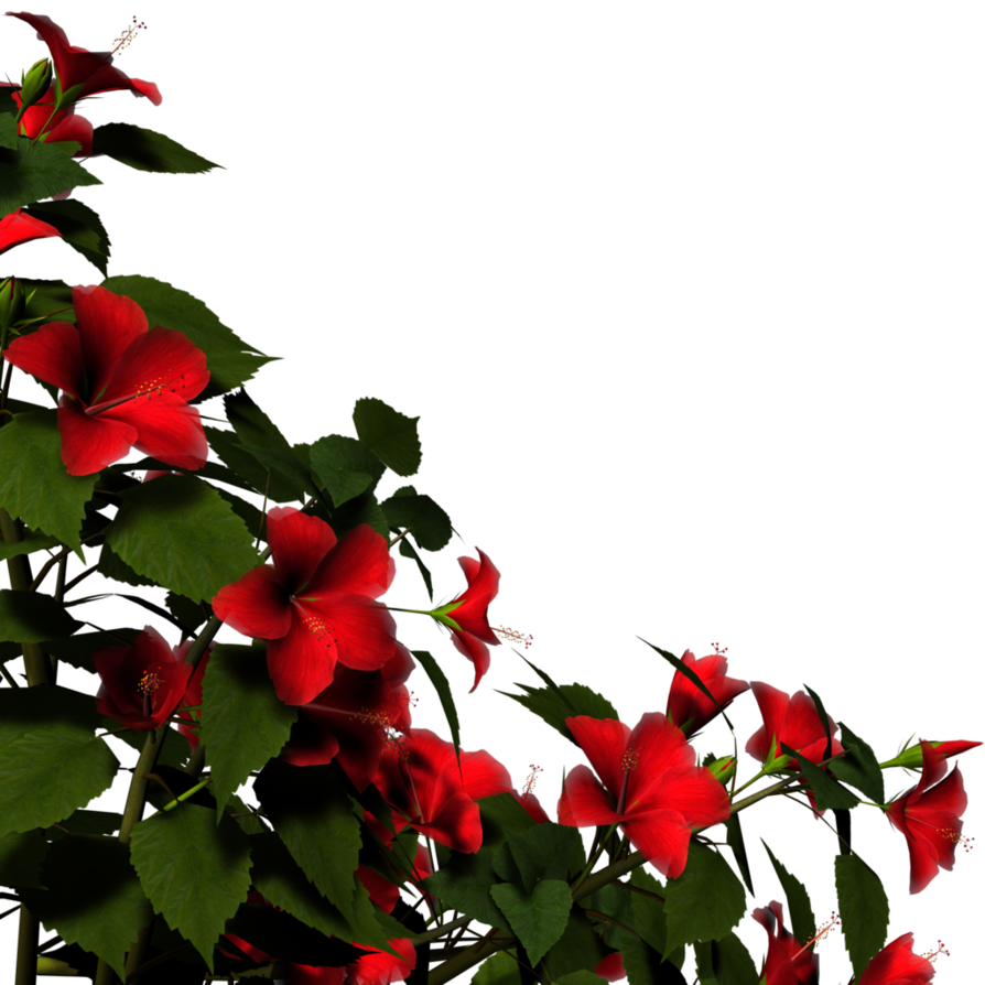 Hibiscus flower png border. By brokenwing dstock on