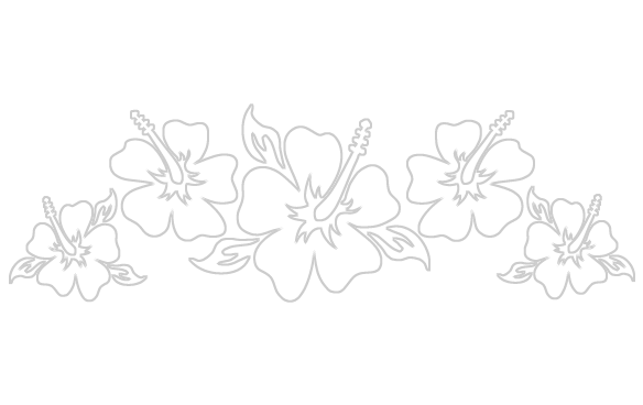 Hibiscus flower png border. Classic flowers