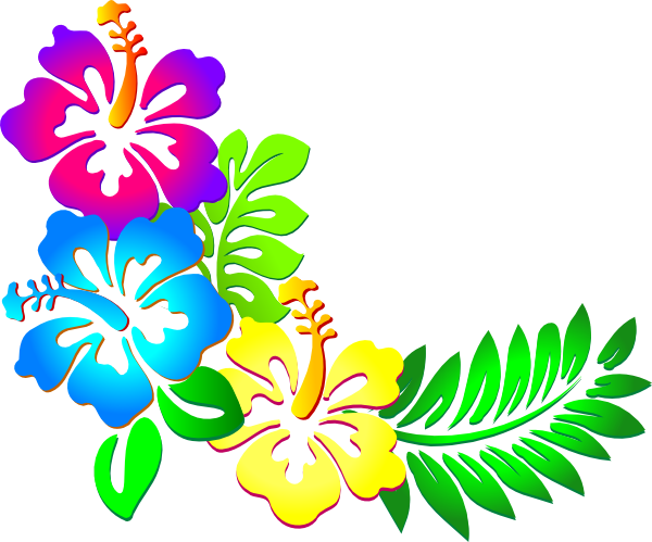 Hibiscus flower png border. Collection of clipart