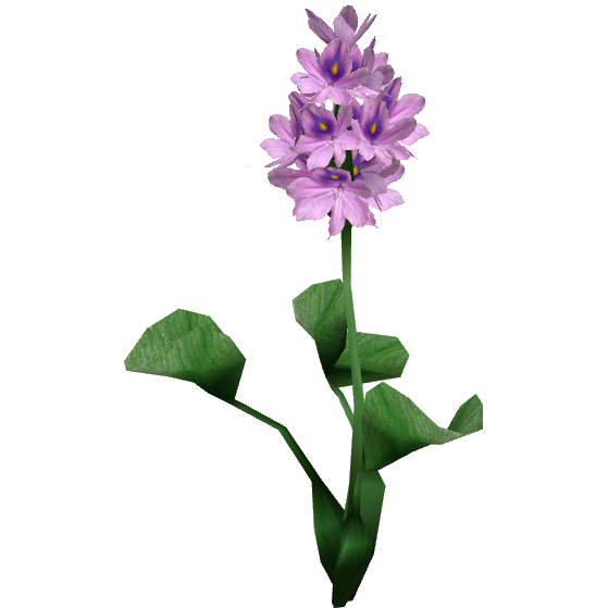 High definition hyacinth png image. Water hispa designs zt