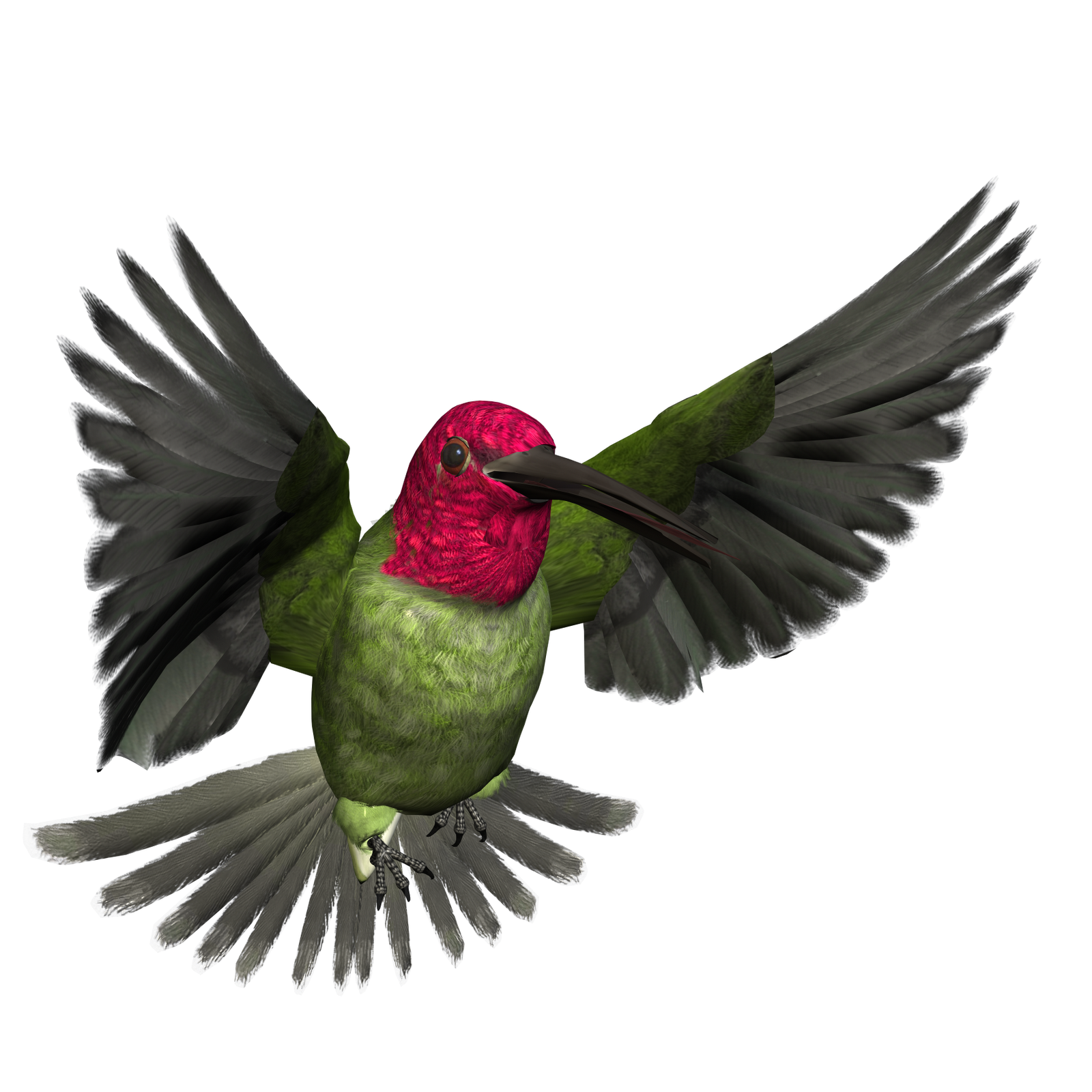 High resolution png images free download. Bird content clip art