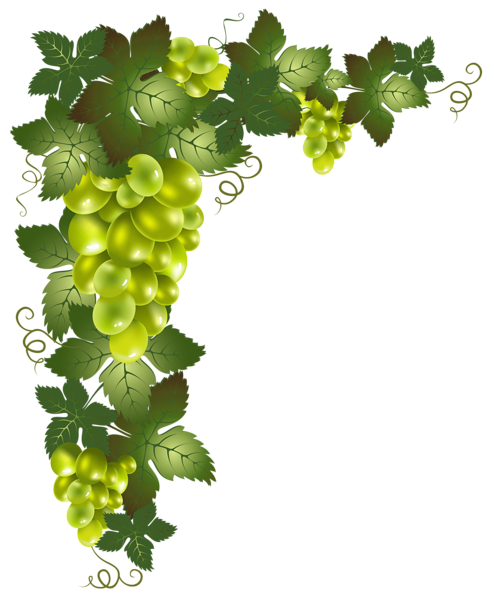grapes vector png