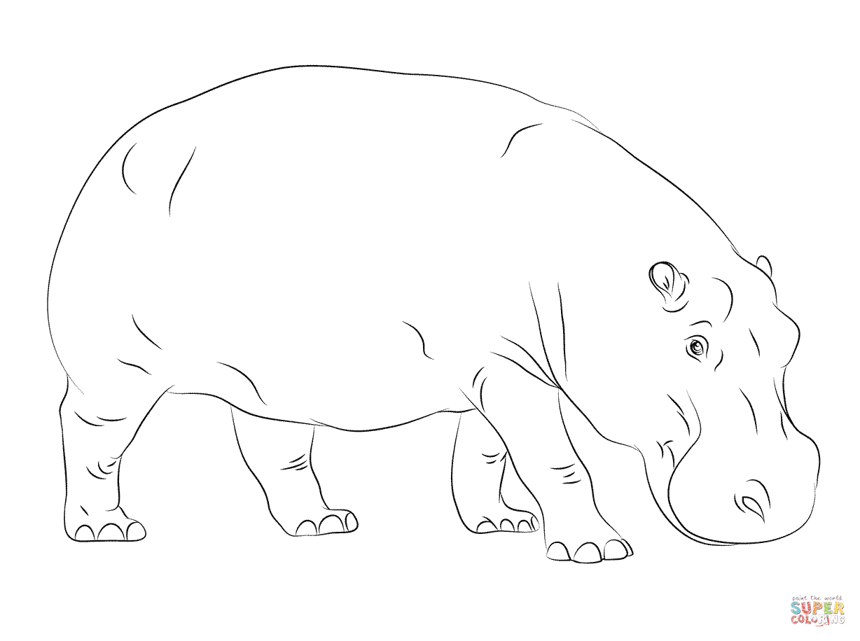 Hippo clipart coloring. Cute hippopotamus page free