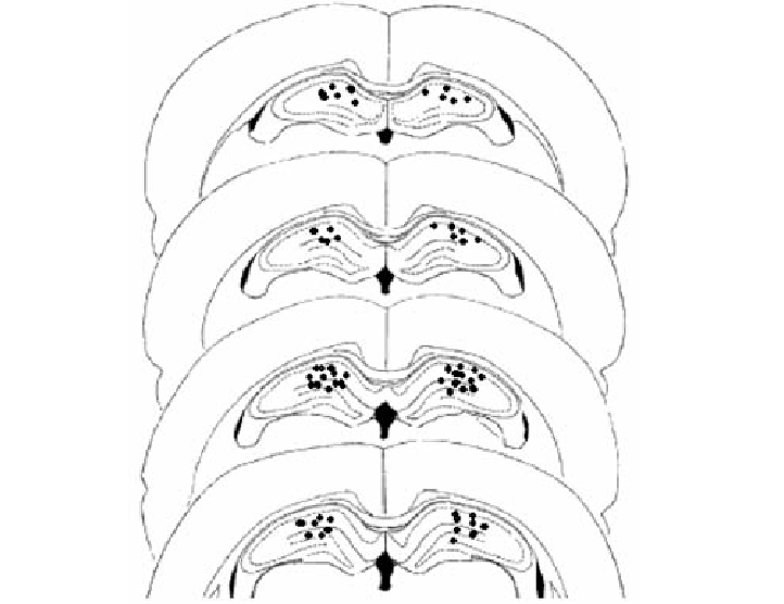 Hippocampus drawing. The approximate cannulae placement