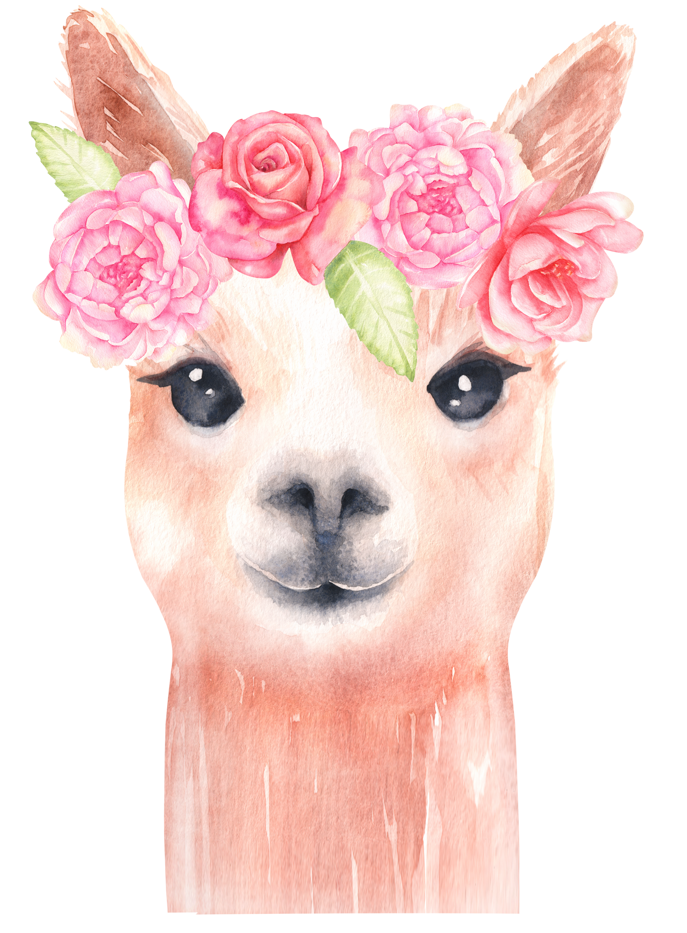 Llama graphics alpaca and. Flower clipart watercolor clipart transparent library