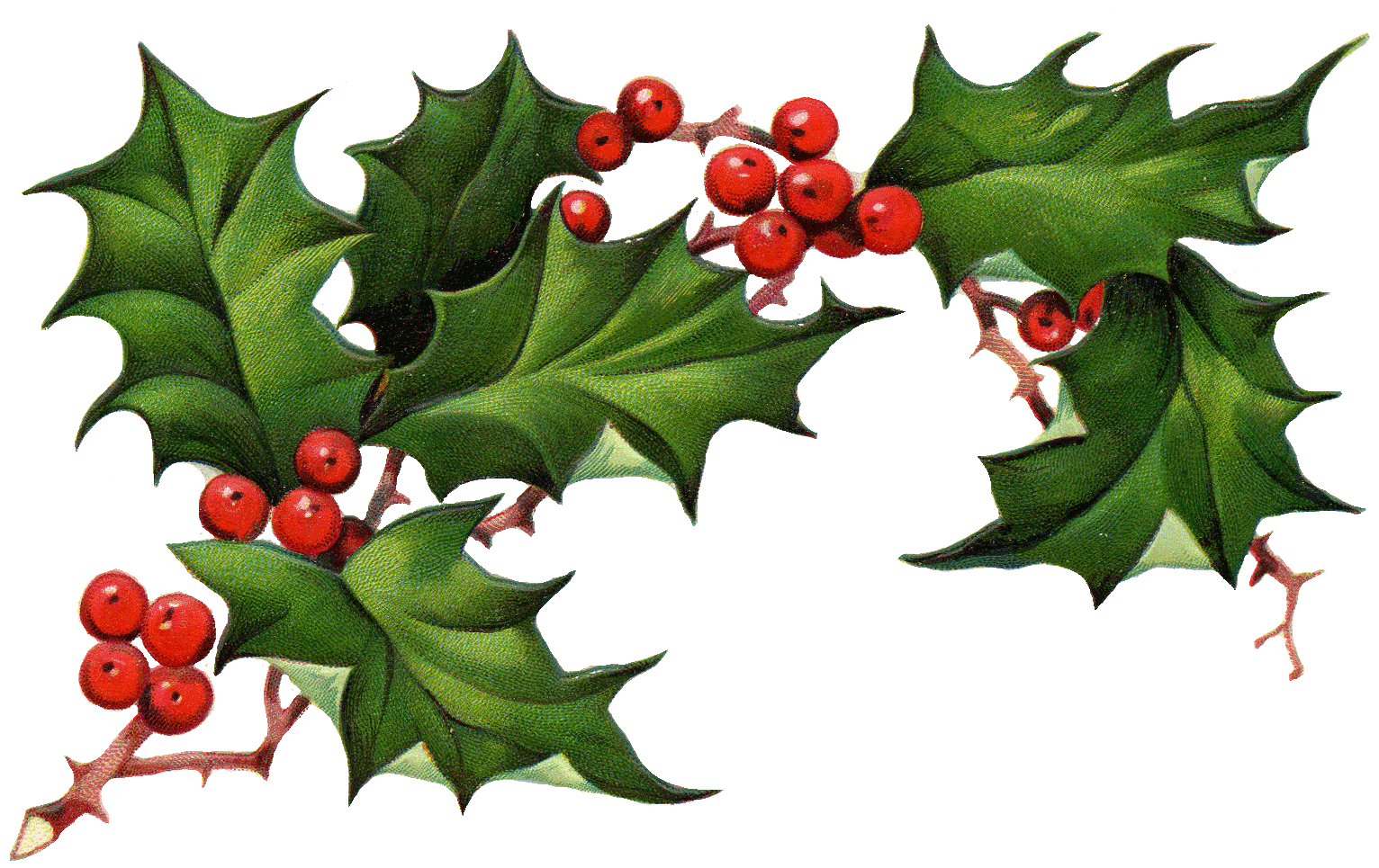 Transparent holly berries. Collection of clipart