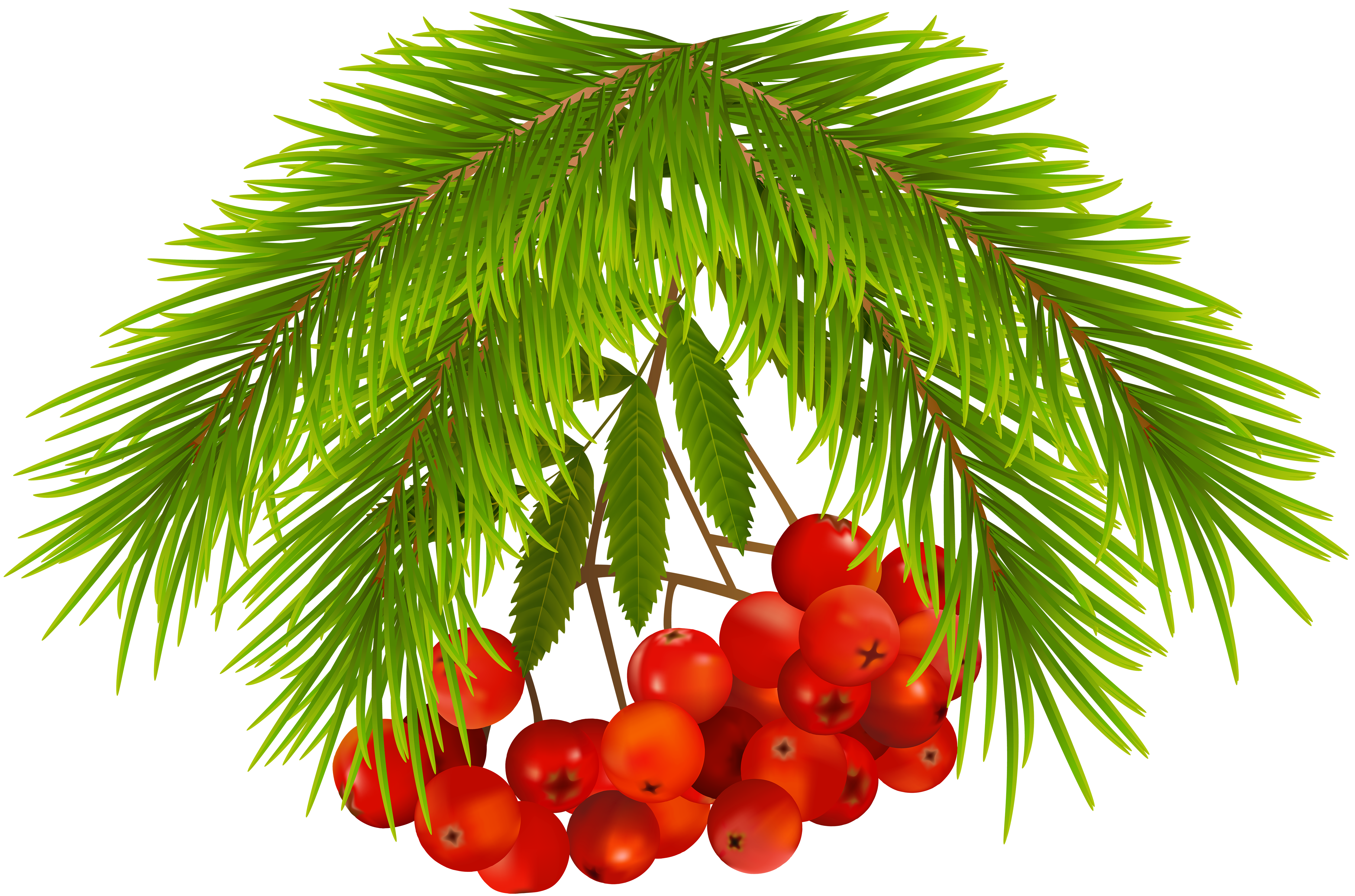 Holly berries png. Christmas clip art image