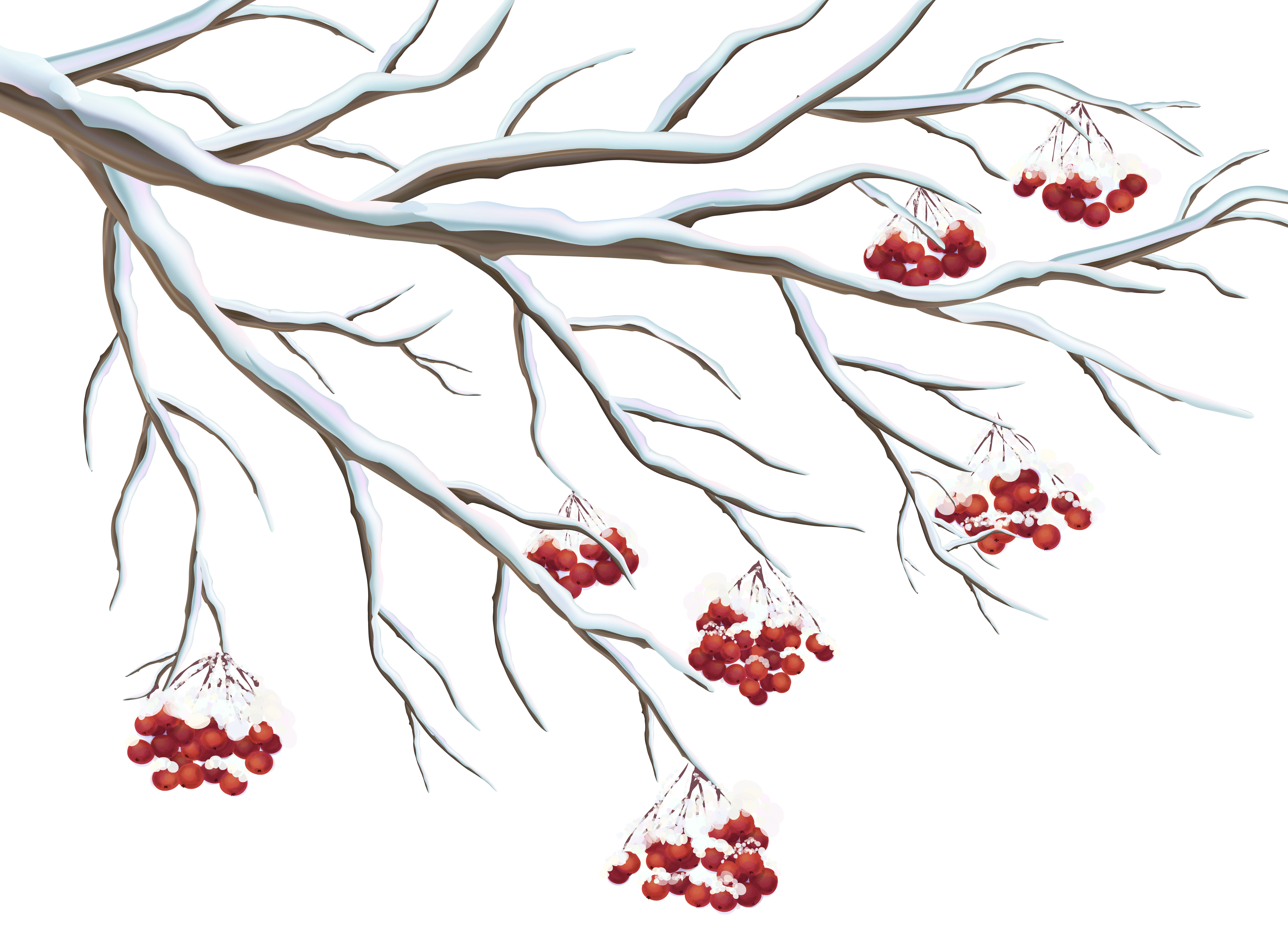 Holly berries png. Snowy clipart gallery yopriceville