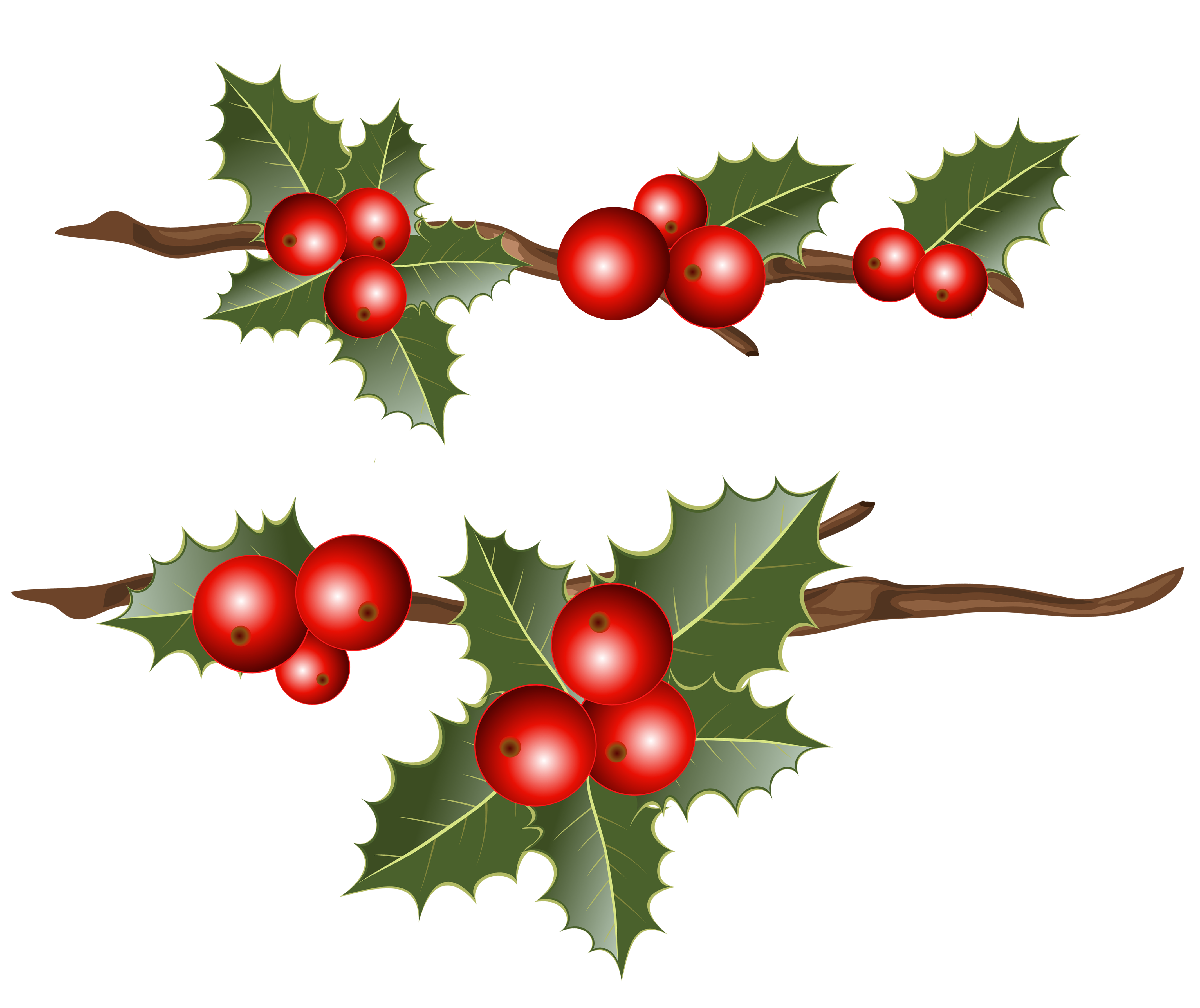 Holly branch png. Branches clipart image gallery
