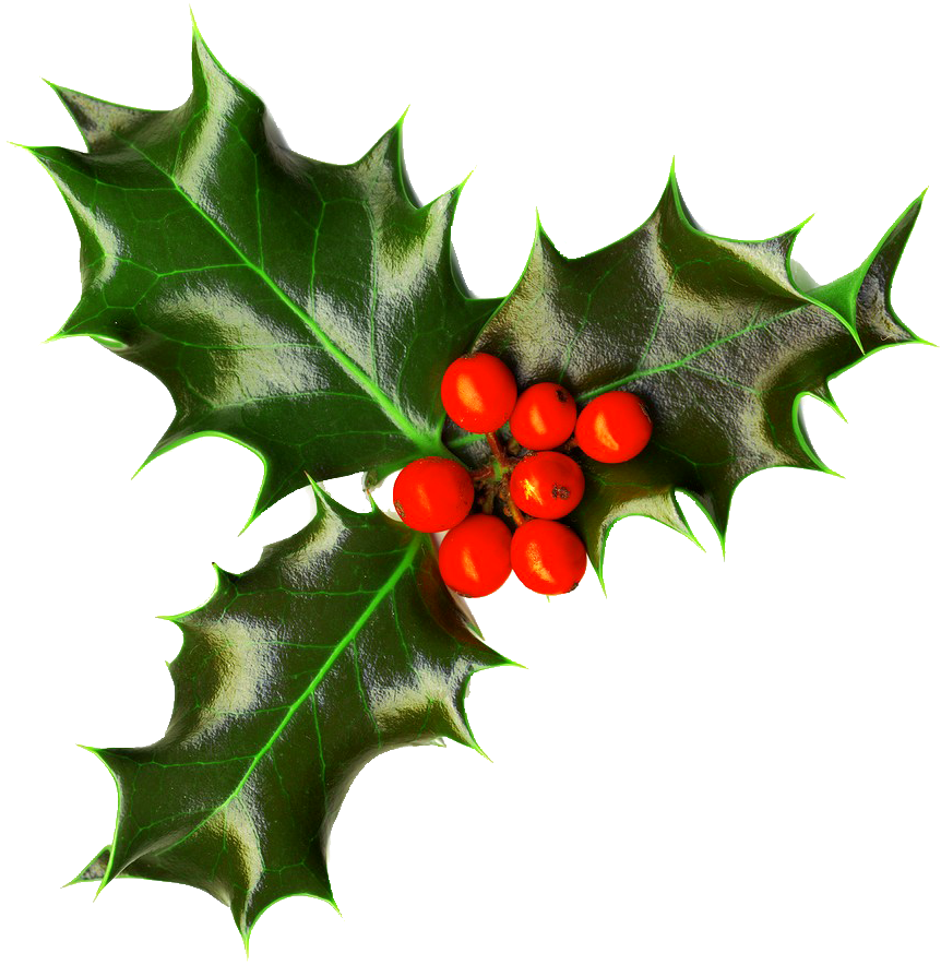 Holly branch png. Christmas images free download