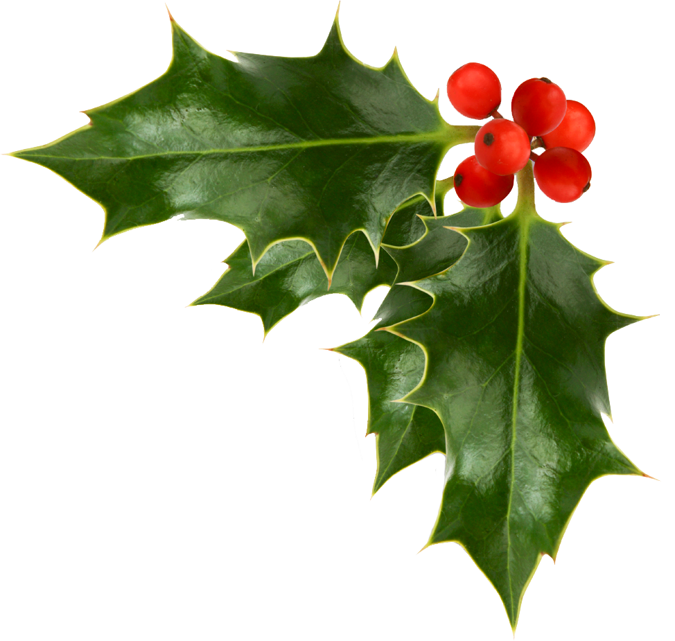 Holly branch png. Images of christmas corner