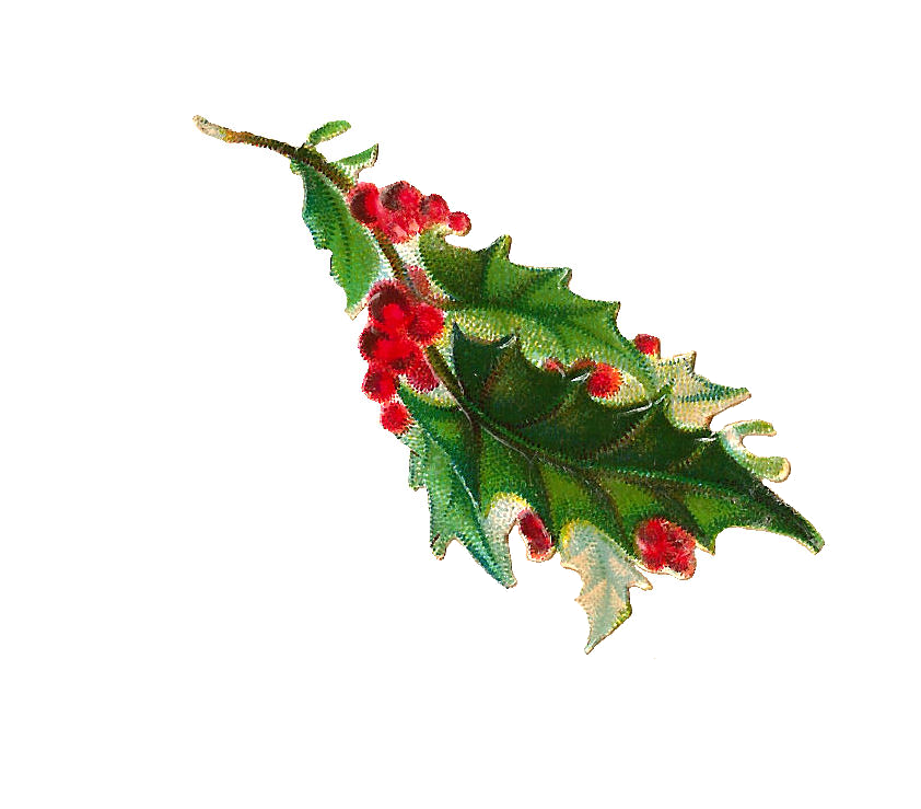 Holly branch png. Antique images free christmas