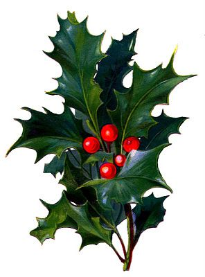 Holly clipart holly plant. Victorian christmas clip art