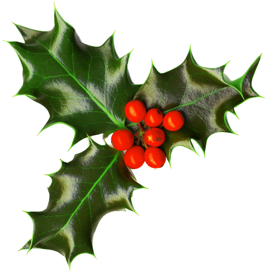 Holly png. Xmas by iamszissz on