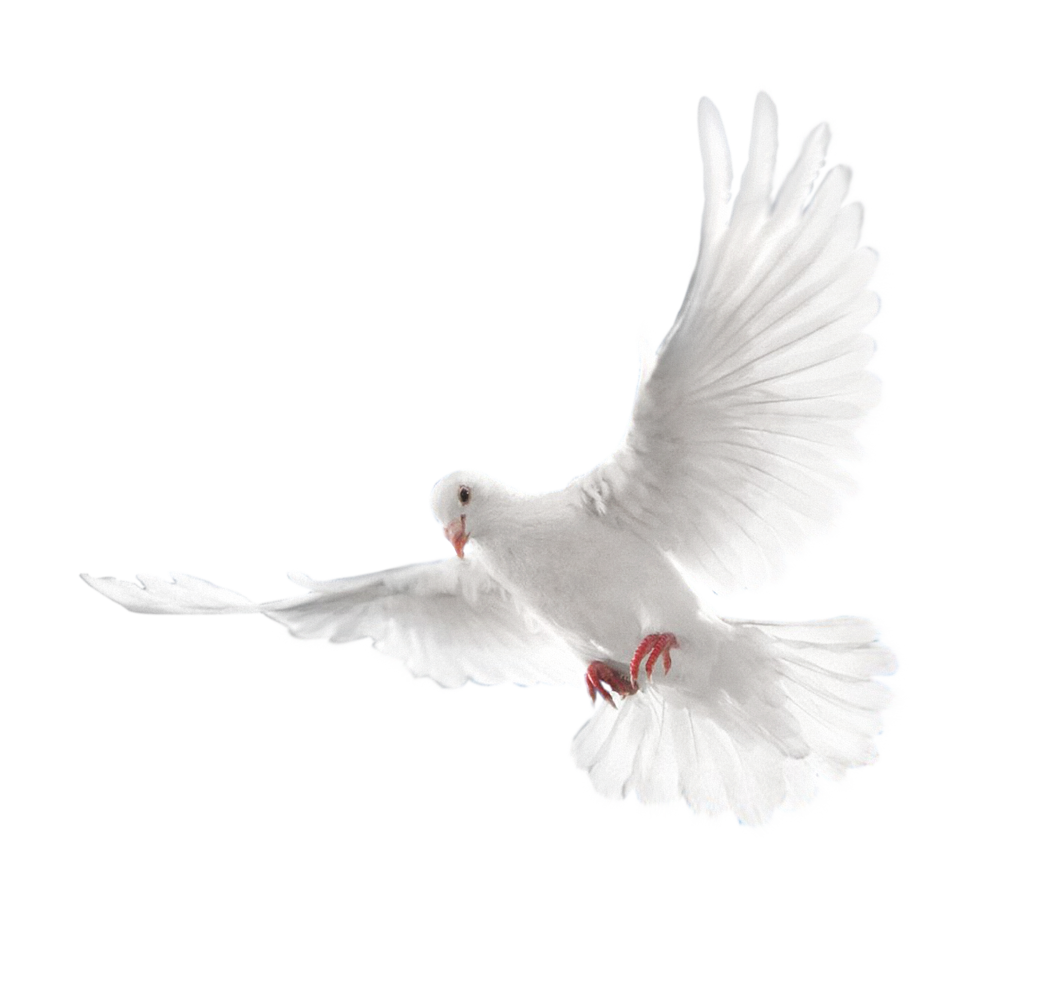 Holy spirit dove png. Columbidae doves as symbols