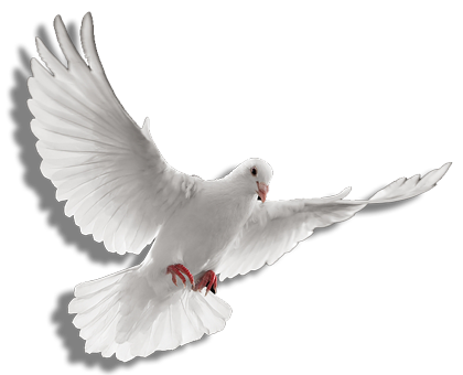 Vector doves two. Png holy spirit transparent
