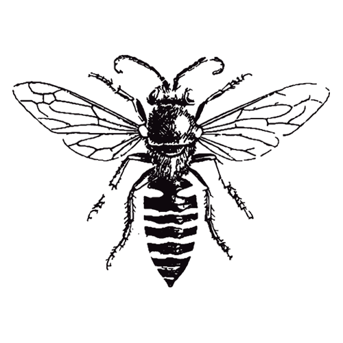 Honey bee drawing png. Horsecreek