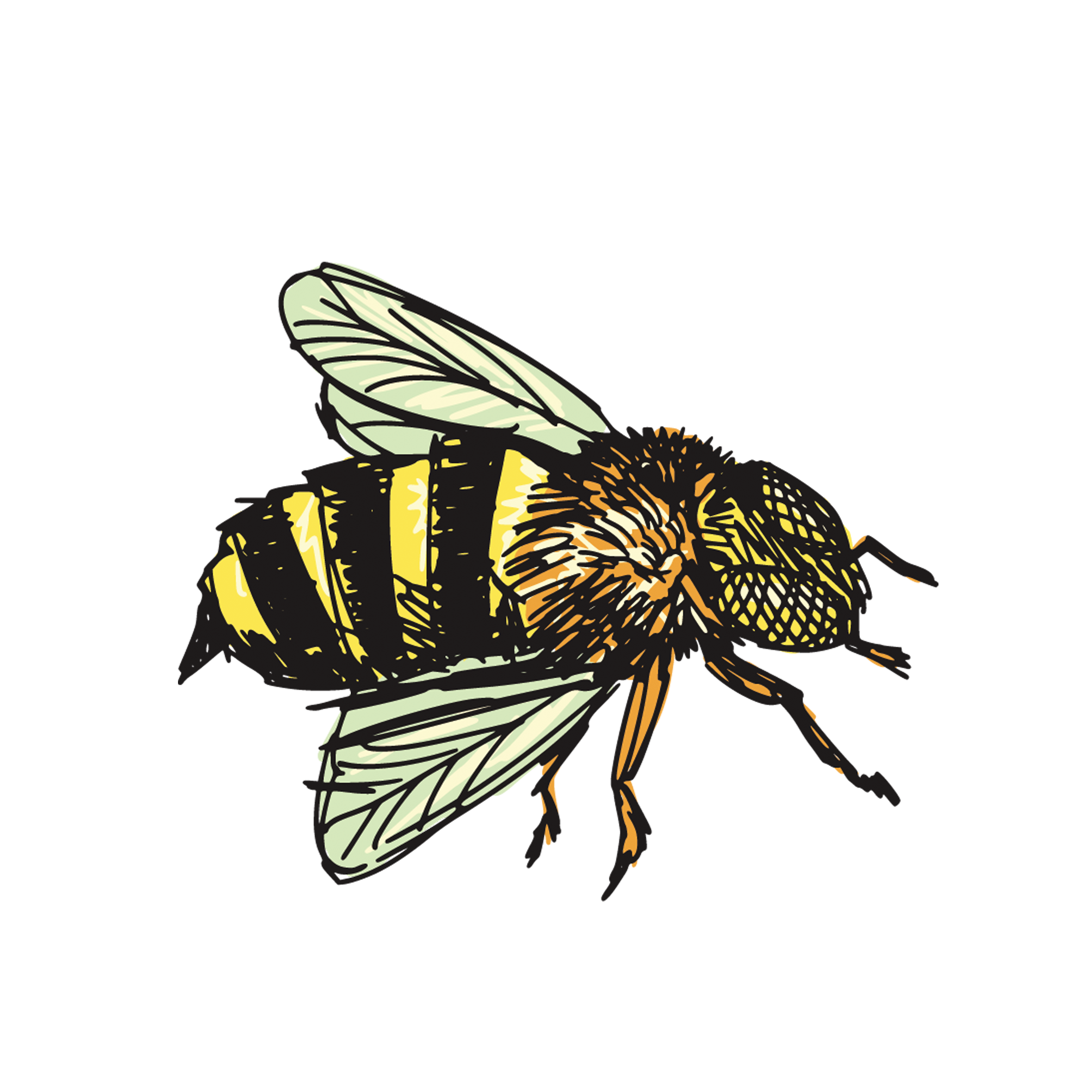 Honey bee drawing png. Insect clip art transprent
