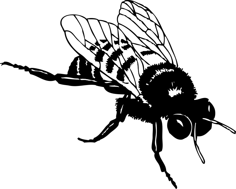 Honey bee drawing png. Free stock photos illustration
