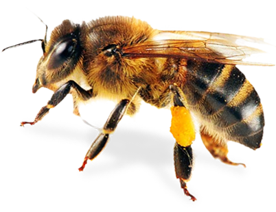 bees png