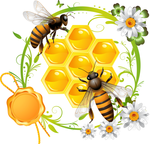 Honey clipart label. Pinterest bee and