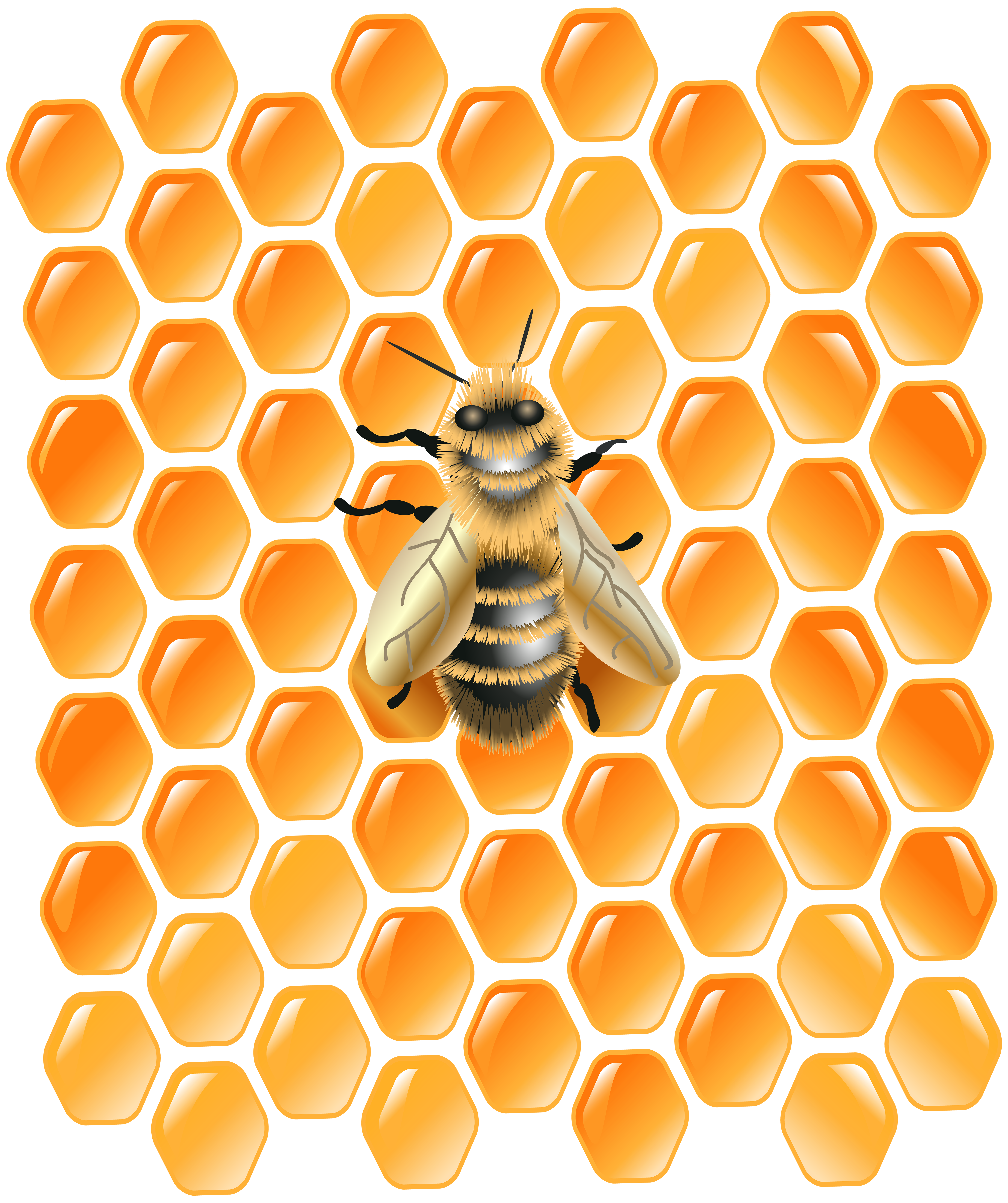 Honeycomb bee png. With clip art image